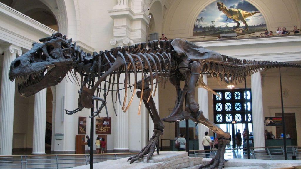 tyrannosaurus_sue1